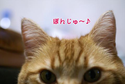 ぼんじゅ~2011.jpg