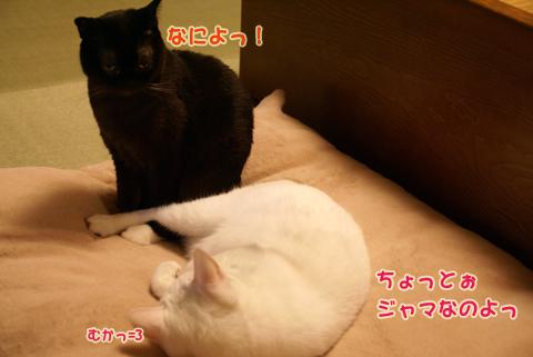 猫の時間23.jpg