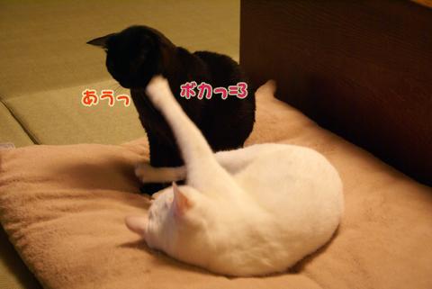 猫の時間24.jpg