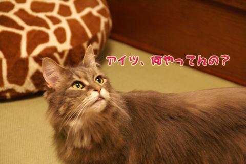 猫の時間33.jpg