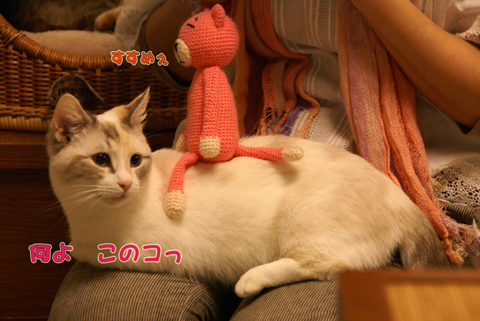 猫の時間54.jpg