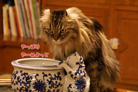 猫の時間59.jpg