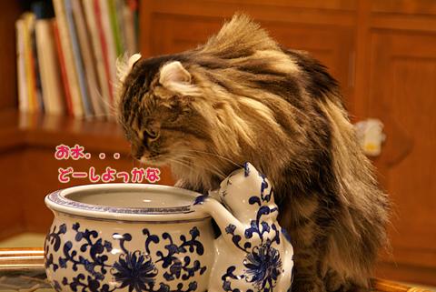 猫の時間60.jpg