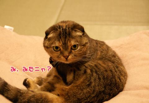 猫の時間73.jpg